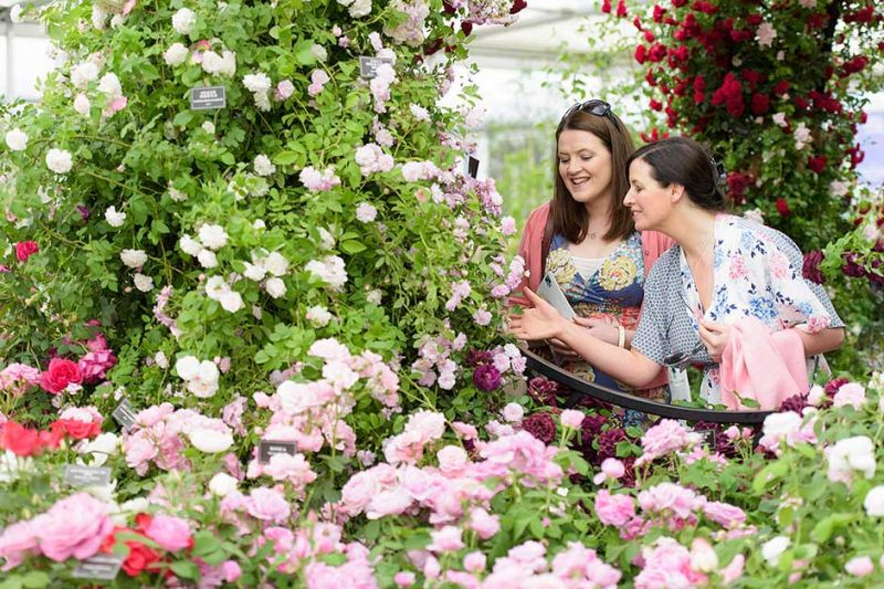 The Chelsea Flower Show starts tomorrow