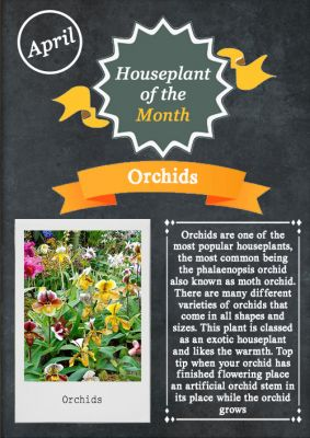 Houseplant of the Month - April