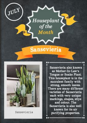 Houseplant of the month July