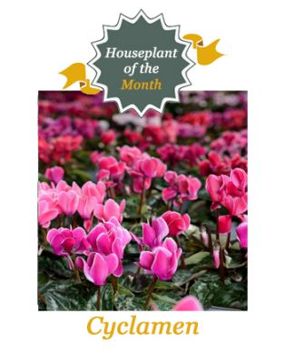 Houseplant of the month - October