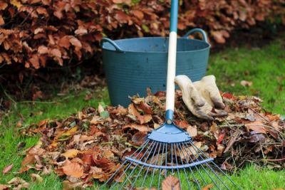 Leaves: the final bounty of the gardening year